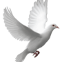 An image of a dove, symbolizing the Holy Spirit